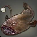 Karmin-Anglerfisch
