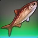 Meerschnuppe